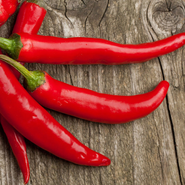 Bright Red and Shiny Chili Peppers