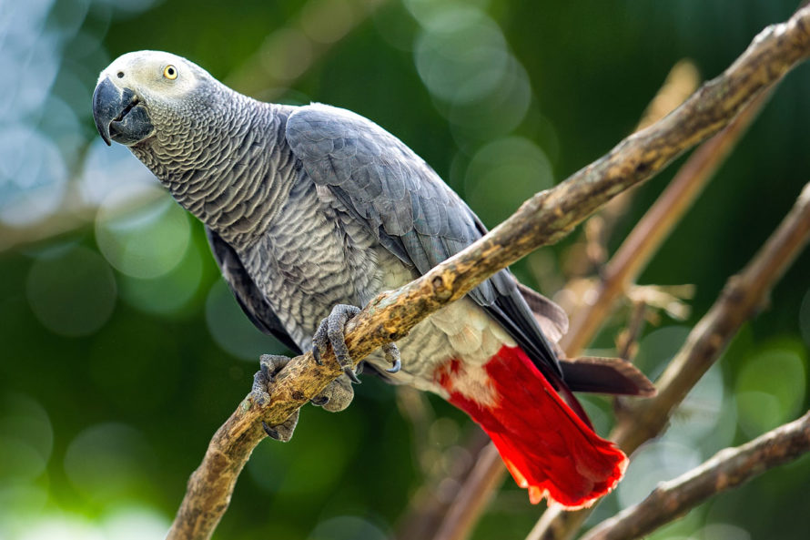 Tropical Parrot With Red Feathers
